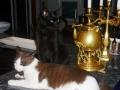 veb-kkkenbords-katte-p1020293